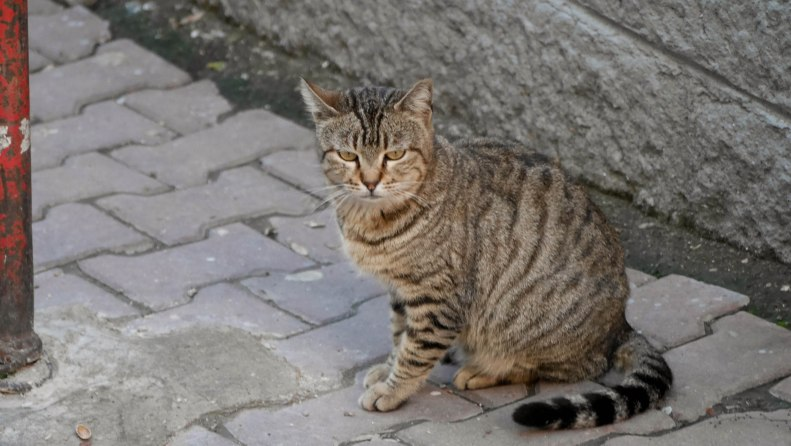 Another attraction: numerous cats