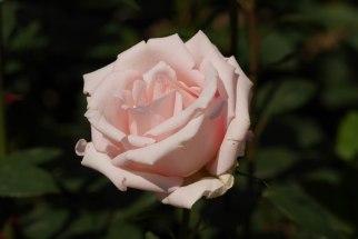 Bern, Rose Garden