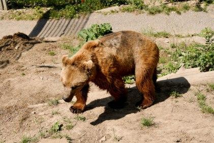 The Bear Park, Bern