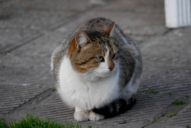 A fury cat